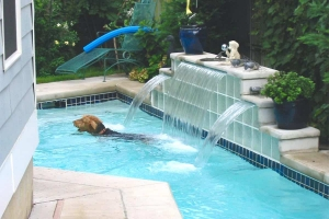 Water Fountain Design Pet Pool
